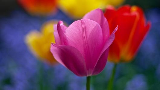 bloom-1846355_1280